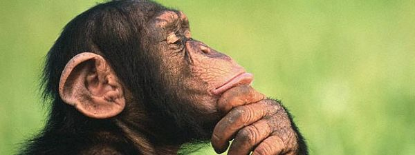 Reflexiones de un primate